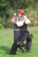 Foto 3 DOBERMANN WUNDERSCHONE WELPEN mit FCI PAPIEREN !