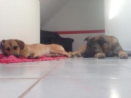 Foto 3 DRINGEND !! der Beschützer Max sucht sein zuhause für immer