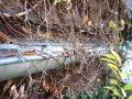 Dachrinnen vom Laub befreien, damit es nicht ins Haus hineinläuft; Dachrinnenreinigung