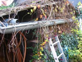 Foto 2 Dachrinnen vom Laub befreien, damit es nicht ins Haus hineinläuft; Dachrinnenreinigung