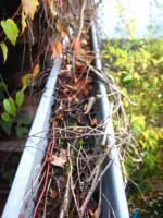 Foto 5 Dachrinnen vom Laub befreien, damit es nicht ins Haus hineinläuft; Dachrinnenreinigung