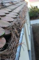 Foto 3 Dachrinnen-Reinigung; Laub und Schmutz aus Rinnen entfernen