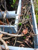 Dachrinnenreinigung; Dachrinne entleeren, Laub aus Dachrinne entfernen