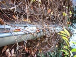Foto 5 Dachrinnenreinigung; Dachrinne entleeren, Laub aus Dachrinne entfernen