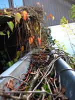 Foto 6 Dachrinnenreinigung; Dachrinne entleeren, Laub aus Dachrinne entfernen