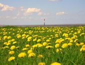Foto 3 Das Nordseebad Dorum-Neufeld im Cuxland erleben: Urlaub am Nationalpark!