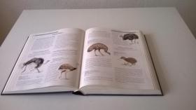 Foto 3 Das große illustrierte Tierlexikon