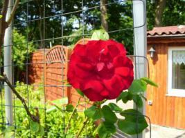 Das kleine Rosenparadies!