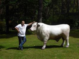 Foto 3 Das könnte Dein Deko Bulle sein und den kannst Du neben Deine Deko Kuh stellen ...