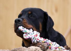Foto 2 Dein Hundekindergarten