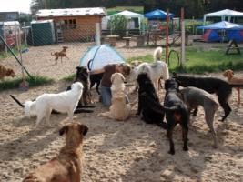 Foto 3 Dein Hundekindergarten