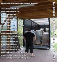 Foto 5 Deko Kuh kaufen bei www.dekomitpfiff.de … oder Deko Pferd oder Deko Stier ...