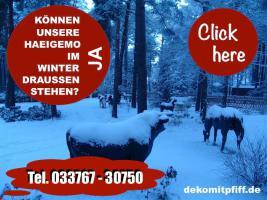 Foto 7 Deko Kuh kaufen bei www.dekomitpfiff.de … oder Deko Pferd oder Deko Stier ...