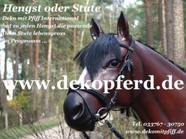 Deko Pferd lebensgross zum Aufsitzen bis 130 kg haben wir für Sie ... www.dekopferd.de anklicken