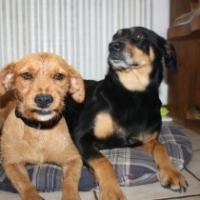 Foto 3 Der kleine Piccolino aus Wetzlar sucht eine Familie ......