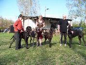 Foto 4 Deutsche Doggen - Treffpunkt Hundeplatz
