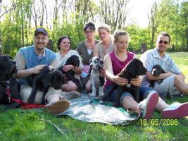 Foto 8 Deutsche Doggen - Treffpunkt Hundeplatz