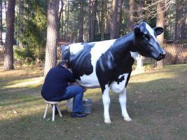 Foto 2 Die Kuh …. wenn Ihre Gäste melken möchten ...