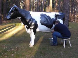 Foto 3 Die Kuh …. wenn Ihre Gäste melken möchten ...