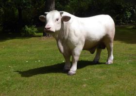 Foto 4 Die Kuh deines Nachbar steht allein Im Garten … dann schenke doch deinen Nacharn einen Deko Bullen ...