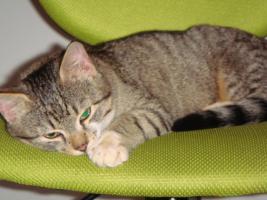Foto 3 Die kleine Rosa sucht ein Zuhause