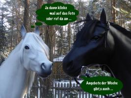 Foto 7 Die neue Generation - Holstein - Friesian Deko Kuh Modelle erleben ...