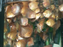Foto 3 Diskusfische in verschiedenen Farben und größen