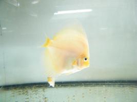 Foto 6 Diskusfische zu  günstigen Preisen