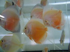 Foto 8 Diskusfische zu  günstigen Preisen