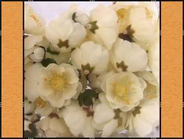 Diverse Streuteile – Lebensecht - (Kirschblüten, Rosenblätter, Margeriten, Blätter)
