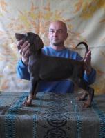 Foto 2 Dobermann Welpen zu verkaufen
