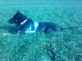 Dog Team NRW : Duisburg Großenbaum .Coaching  Hundetraining  Coaching november -dez 2014 jetzt ordern
