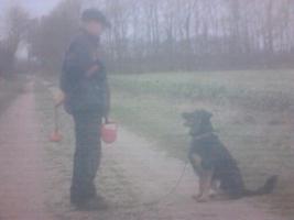 Foto 3 Dog Team NRW : Duisburg Großenbaum .Coaching  Hundetraining  Coaching november -dez 2014 jetzt ordern