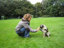 Foto 3 Dogdance für Jederhund - mit handicap - graue Schnauze - oder gesund und Hundfreunde mit handicap