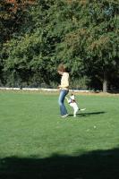 Foto 4 Dogdance für Jederhund - mit handicap - graue Schnauze - oder gesund und Hundfreunde mit handicap