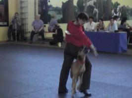 Foto 10 Dogdance für Jederhund - mit handicap - graue Schnauze - oder gesund und Hundfreunde mit handicap