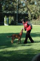 Foto 13 Dogdance für Jederhund - mit handicap - graue Schnauze - oder gesund und Hundfreunde mit handicap