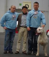 Foto 3 Dogo Argentino Welpen aus beste Zucht in Europa