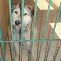 Foto 2 Donek möchte ein zu Hause !!