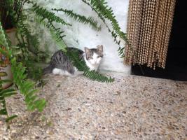 Foto 2 Drei kleine Kätzchen auf die Suche nach Liebe