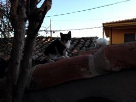 Foto 4 Drei kleine Kätzchen auf die Suche nach Liebe