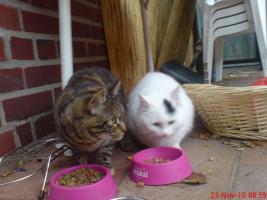 Dringend!!!! 2 hübsche Katzen