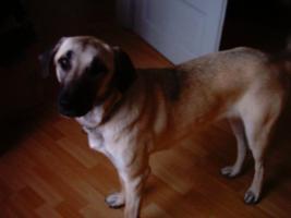 Foto 2 Dringend Hund abzugeben !!!!!!