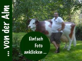 Foto 3 Du hast noch keine Deko Kuh im Garten…???????