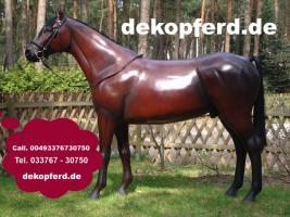 Foto 3 Du hast noch keinen Deko Kuh - 8905