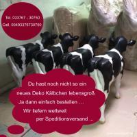 Du hast noch nicht das neue Holstein Deko Kalb und auch nicht ne Holstein - Friesian Deko Kuh … ja dann bestellen ...