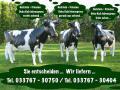 Du möchtest ein Deko Pferd ne Deko Kuh und einen Deko Stier für Deinen Garten…?