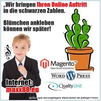 EInzigartige Shoplösungen. So kann man Geld verdienen. Magento + Wordpress