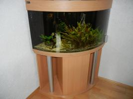 Eck Aquarium 180 L mit Unterschrank kplt.eingerichtet