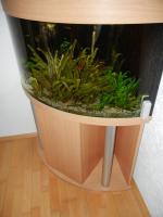 Foto 2 Eck Aquarium 180 L mit Unterschrank kplt.eingerichtet